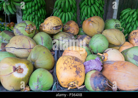 An array of colorful coconuts on a table, with green bananas hanging in the background, at a roadside stand,  in Costa Rica - Stock Photo