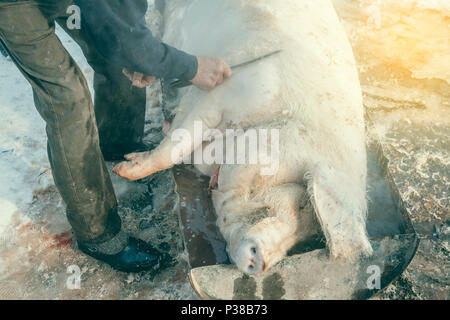 Traditional pig slaughter with hot water, slaughter remove pig hair with knife. Vintage style. - Stock Photo