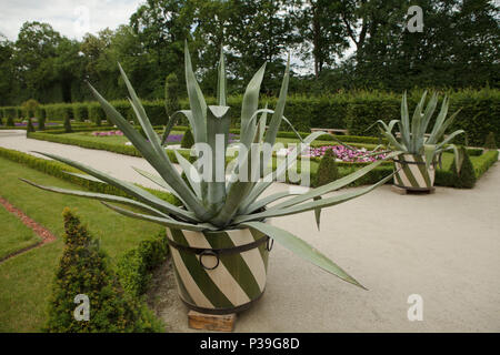 big aloe in a pot with green stripes in classical residence park in Wilanow, Warsaw, Poland - Stock Photo