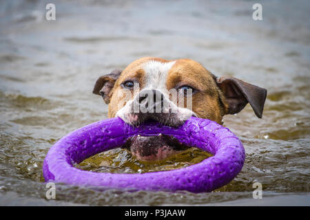 Dog swimming in a pond on a hot summer day - Stock Photo