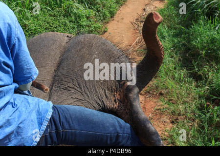 Asian tour trip jungle on elephant in the forest. - Stock Photo