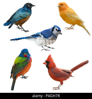 Birds set watercolor painting, isolated on white background - Stock Photo