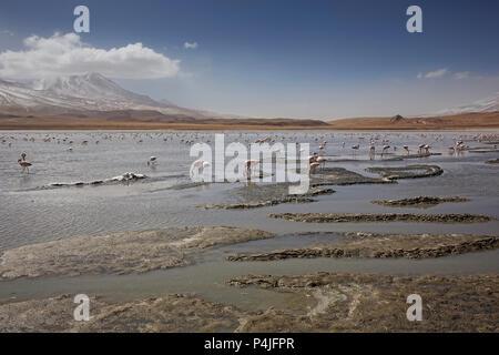 Lake Canapa with pink flamengo's, Atacama Desert, Bolivia - Stock Photo