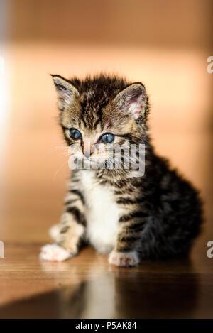 Small sweet tabby kitten.Small sweet tabby kitten. - Stock Photo