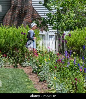 A  young Colonial Woman with a blue blouse, white cap and red skirt strolls through a flower garden in Colonial Williamsburg on a sunny summer day. - Stock Photo
