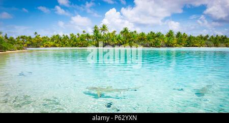 Sharks along the shore in Fakarava, French Polynesia - Stock Photo