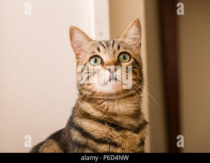 Domestic cat at home - Stock Photo