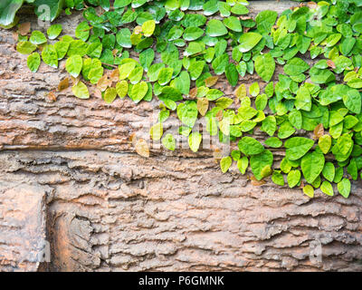 Green leaves stuck on wood for text and content input (Copy Space). Suitable for as background. - Stock Photo