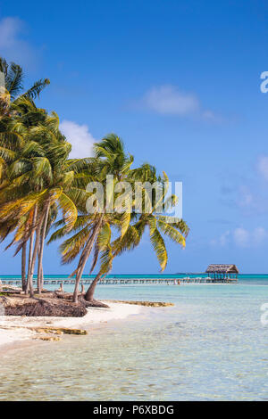 Cuba, Jardines del Rey, Cayo Guillermo, Playa El Paso, Palm trees on white sand beach - Stock Photo