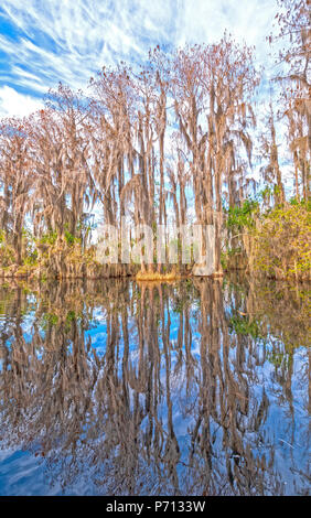 Reflections in the Calm Waters of a Okefenokee Swamp in Georgia - Stock Photo