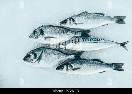 close-up view of fresh gourmet uncooked seafood on ice - Stock Photo