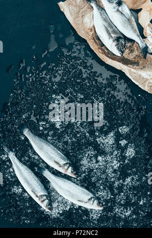 top view of healthy uncooked sea bass fish with ice and salmon on paper on black - Stock Photo