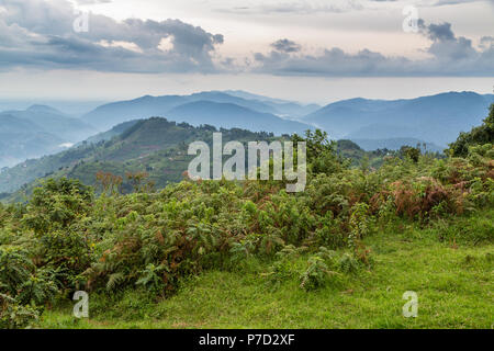 Tropical Rainforest, Central African Hills, Bwindi Impenetrable National Park, Uganda - Stock Photo