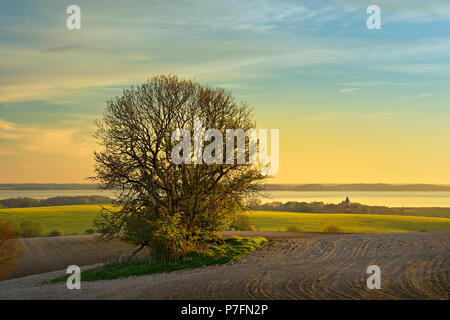 Fields in the evening light, tree on hill grave, view to the Great Jasmund Bodden and to the church of the village Bobbin - Stock Photo