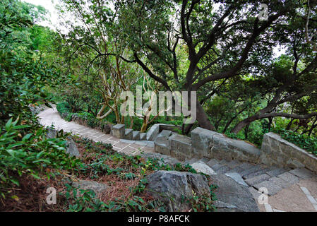 A ladder lined with stone in a park between outlandish plants and trees . For your design - Stock Photo