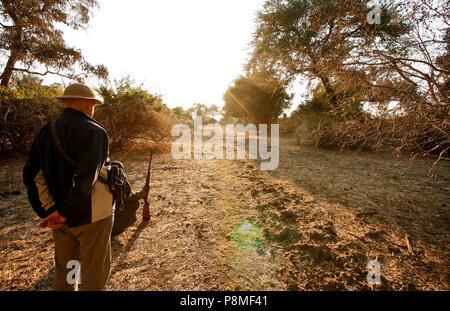Park Ranger and tourist on Walking Safari wathing elephants. Mana Pools National Park. Zimbabwe - Stock Photo