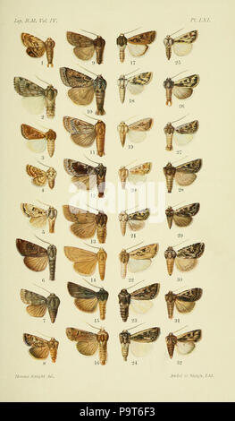 288 Catalogue of the Lepidoptera Phalænæ in the British museum. Plate LXI - Stock Photo