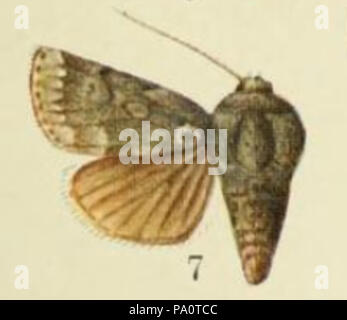 646 Fig 7. Plate LXI of Catalogue of the Lepidoptera Phalænæ in the British museum. (1903) - Stock Photo
