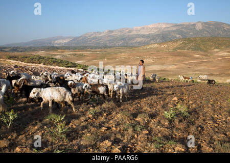 Qashqai shepherd with flock in the early morning, nomad people, Iran - Stock Photo