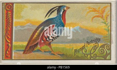 Plumed Partridge, from the Game Birds series (N13) for Allen & Ginter Cigarettes Brands. Dimensions: Sheet: 1 1/2 x 2 3/4 in. (3.8 x 7 cm). Lithographer: George S. Harris & Sons (American, Philadelphia). Publisher: Issued by Allen & Ginter (American, Richmond, Virginia). Date: 1889.  Trade cards from the 'Game Birds' series (N13), issued in 1889 in a set of 50 cards to promote Allen & Ginter brand cigarettes. Museum: Metropolitan Museum of Art, New York, USA. - Stock Photo