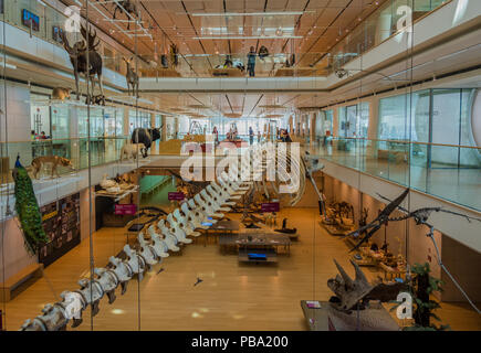 SCIENCE MUSEUM OF TRENTO, Italy:  expositive interactive spaces of the famous Museum denominate MUSE. Renzo Piano architect building. MU.SE. Trento - Stock Photo