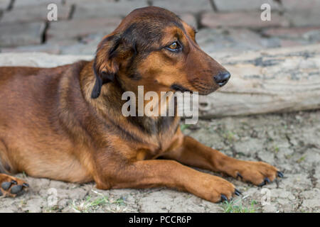 Portrait of cute brown stray dog - Stock Photo