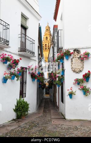 Calleja de las Flores and the Mezquita, Cordoba, Andalucia, Spain, Europe - Stock Photo