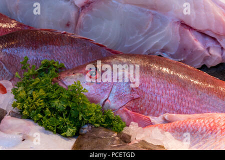 fresh red snapper fish on sale on a fishmongers market stall. - Stock Photo