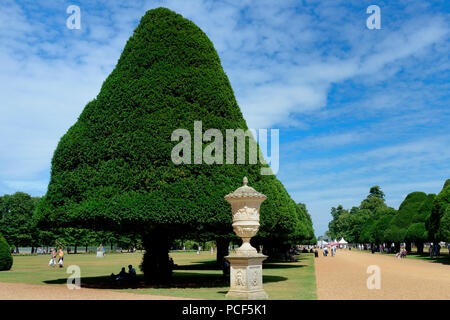 Eiben in Formschnitt, Eibenallee, Taxus baccata, Hampton Court Palace, England, Grossbritannien, Europa, Formschnitteibe - Stock Photo