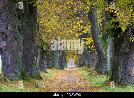 Old Alley in the autumn - Stock Photo
