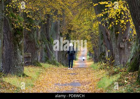 woman walking in an avenue - Stock Photo