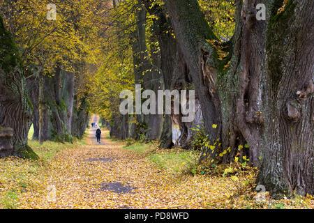 Walk in a avenue near Marktoberdorf - Stock Photo