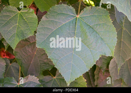 big green leaf front view for background - Stock Photo