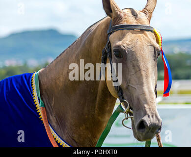 Portrait of a thoroughbred horse before the race. - Stock Photo