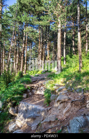 Trail in a coniferous forest in the mountains. Wild woods landscape. Travel concept - Stock Photo