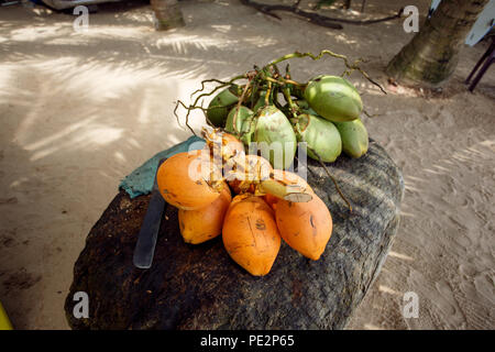Coconuts on the beach in Sri Lanka - Stock Photo