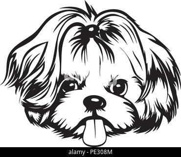 Shih Tzu Dog Breed Pet Puppy Isolated Head Face - Stock Photo
