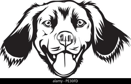Brittany Spaniel Dog Breed Pet Puppy Isolated Head Face - Stock Photo