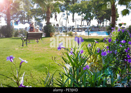 Summer rest. Lilac flowers on a green meadow, the pool in  background - Stock Photo