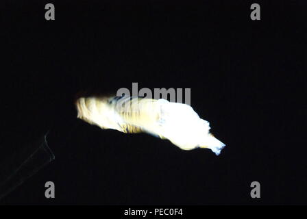 cerf volant la nuit - Stock Photo