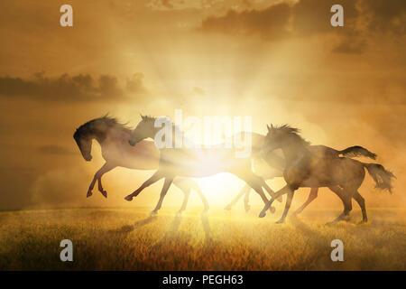 Four horses run on orange sunset background - Stock Photo