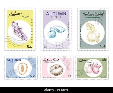 Autumn Fruits, Post Stamps Set of Hand Drawn Sketch Assyrtiko Grape, Nashi Pear or Chinese Pear, Honeydew Melon, Apple and Angel Peach in Trendy Origa - Stock Photo