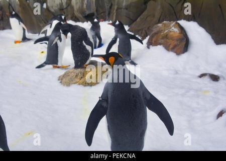 Penguins walk on ice - Stock Photo