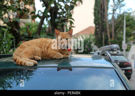 A picture of a cat lying on the street on the car´s roof. - Stock Photo