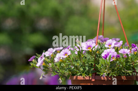 flower pot hanging in the park and pink flowers inside - Stock Photo