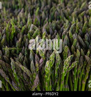 Freshly picked asparagus at the peak of the season - Stock Photo