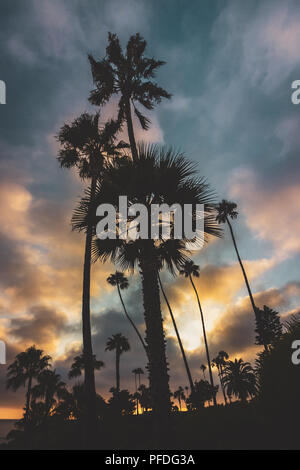 Silhouettes of palm trees at sunset with colorful cloudscape at sunset , Heisler Park, Laguna Beach, California - Stock Photo