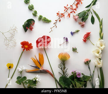 Various flower and stem cuttings - Stock Photo