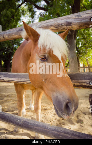 Horse looking to the camera over fence - Stock Photo