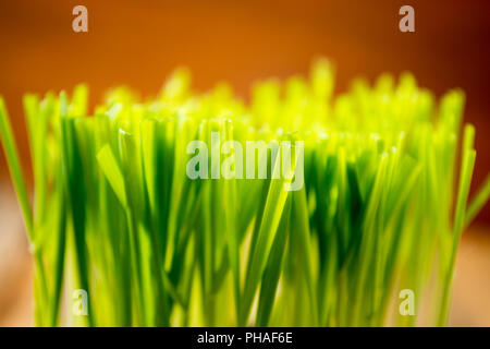 Green wheat in the ceramic cup - Stock Photo